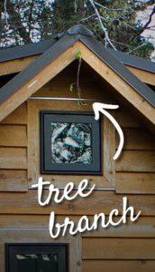 Tiny House Height - Tree