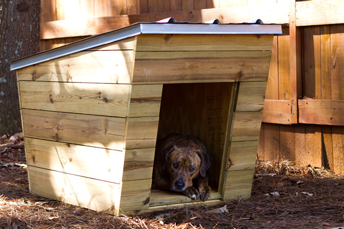 ... ModernDog Dog House Exterior Picture 4 ...
